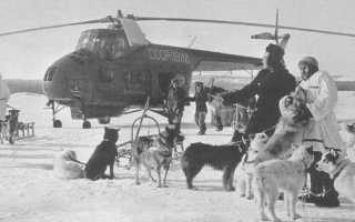 Советский многоцелевой вертолет ми-4: история, описание и характеристики